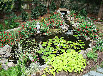 Blog frog pond raleigh nc anne zeneski 286019 the for Backyard pond animals