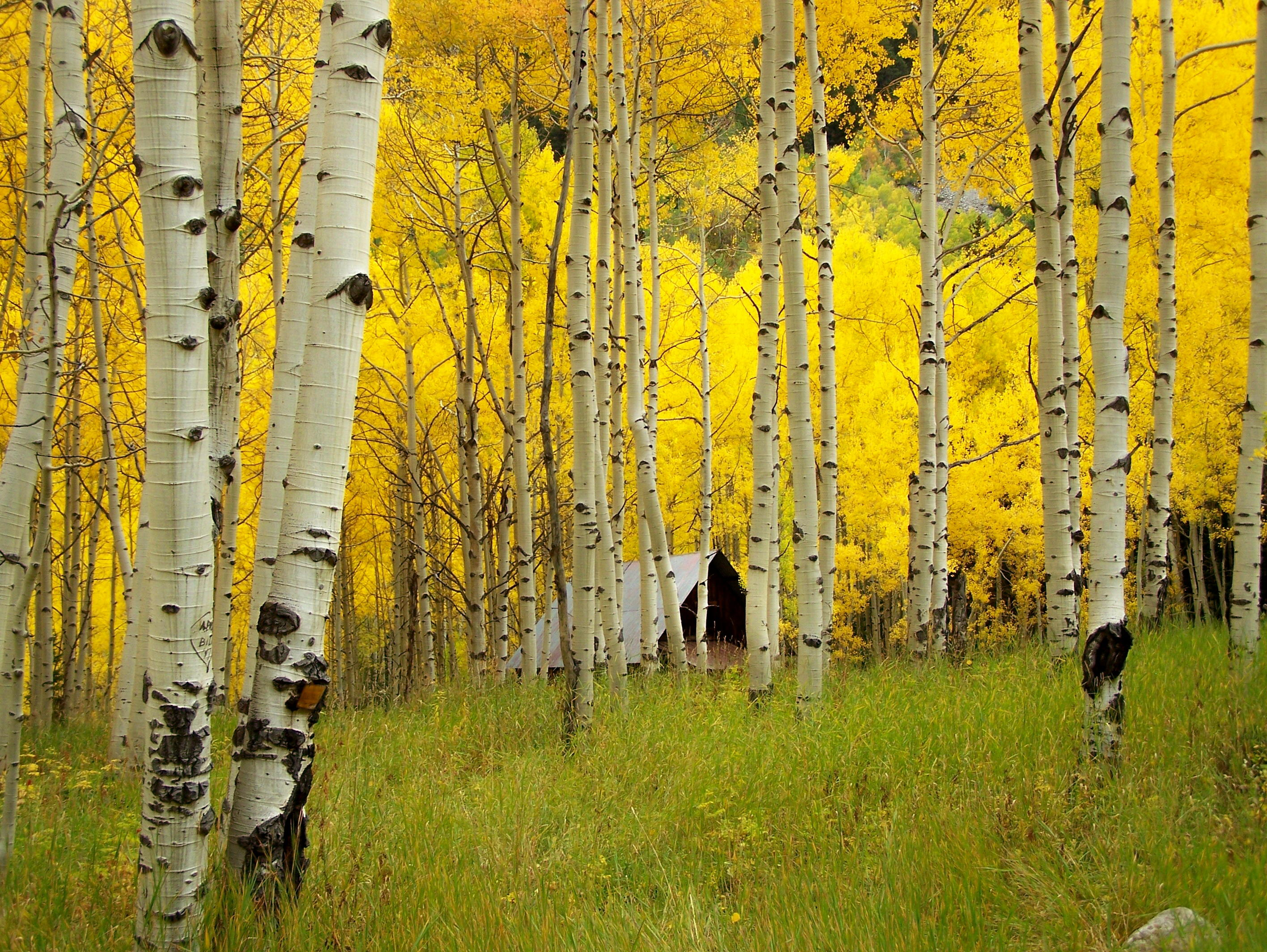 chad martens aspens the national wildlife federation blog