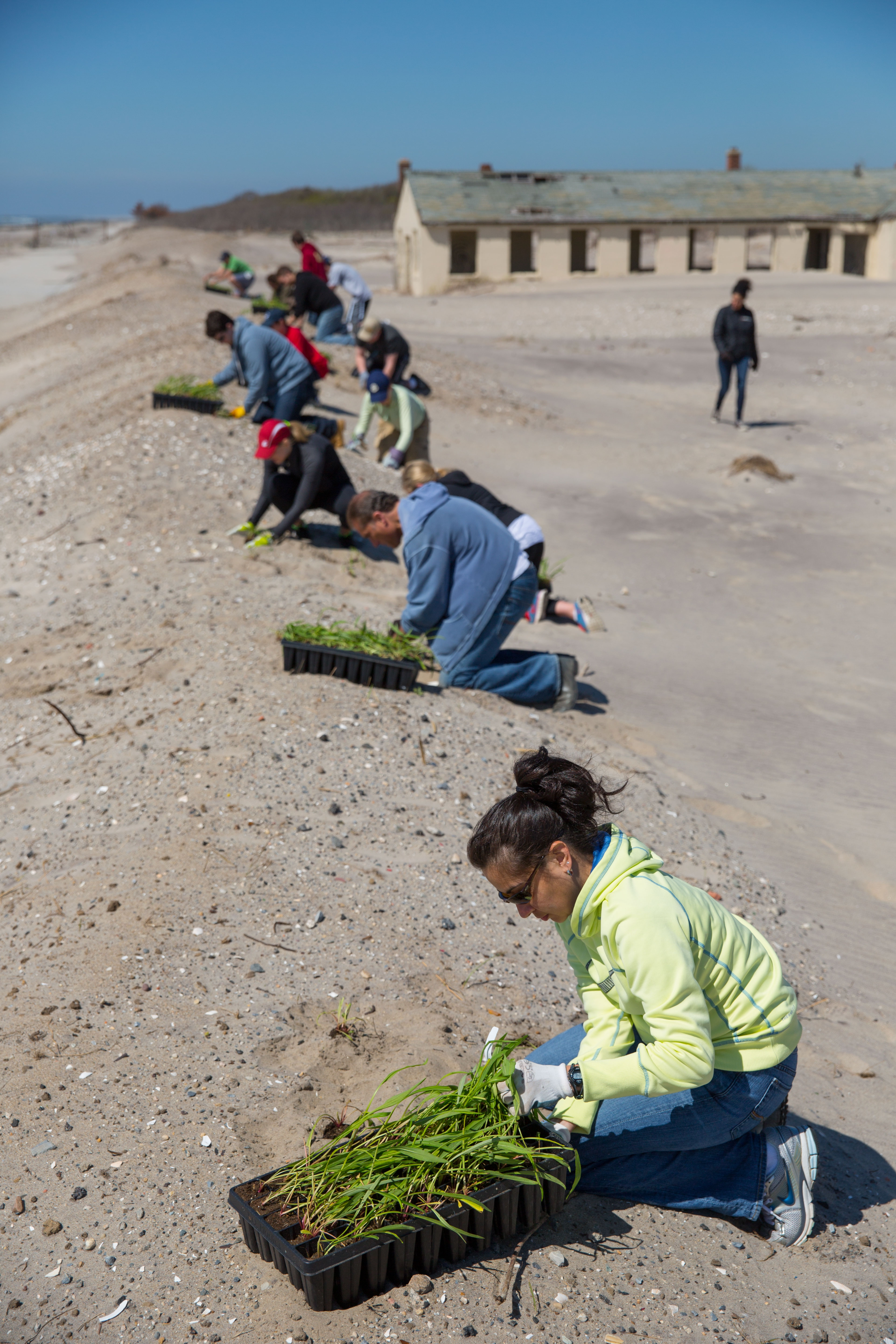 NWF volunteers spent the day planting native grasses to help rebuild dunes devastated by Hurricane Sandy