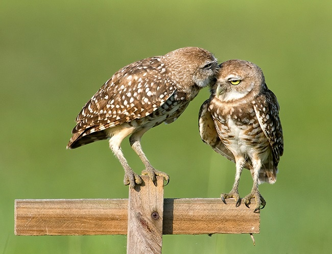10 Wildlife Smooches for International Kissing Day : The ...