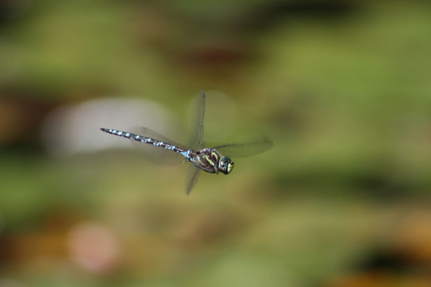 National Wildlife Photo Contest entrant Gail Norwood managed to capture this rare in-focus image of a dragonfly in flight.