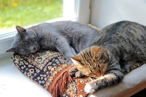 11 tips to keep your indoor cat happy the national for Having an indoor cat